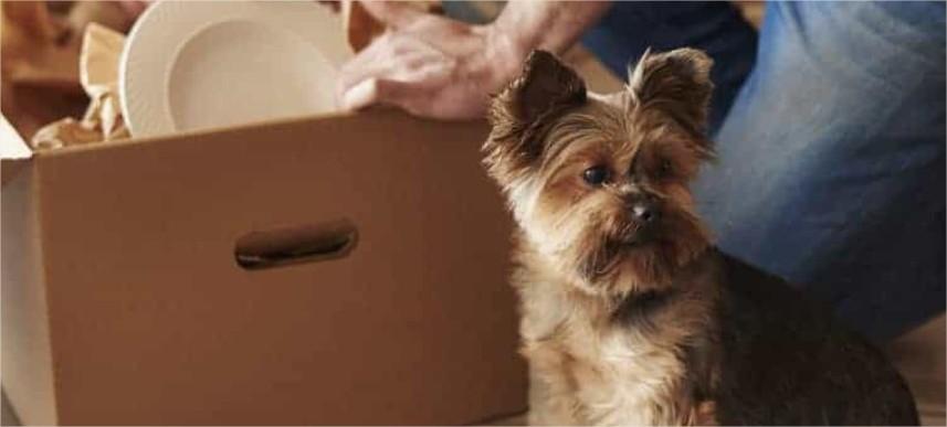 demenagement-Lausanne-avec-chien